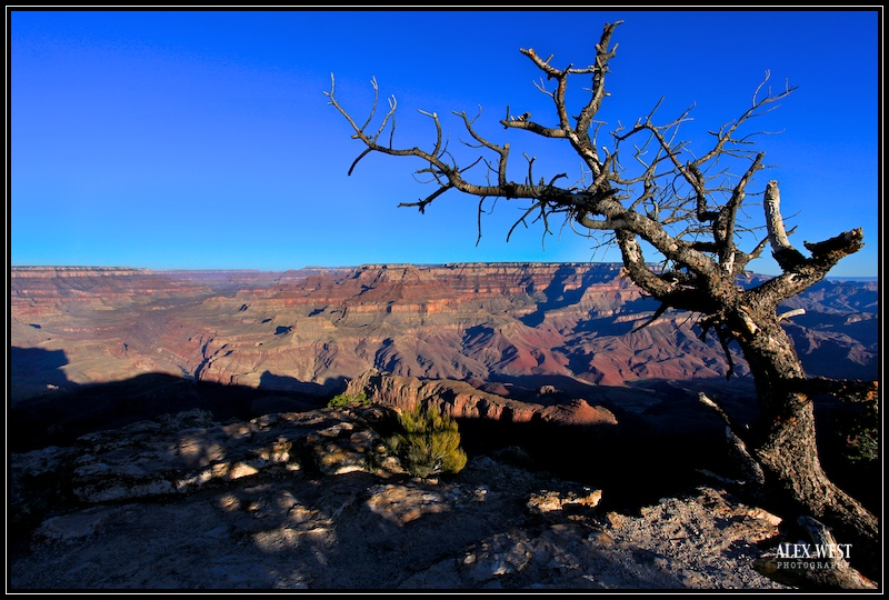 """Standing Strong"" South Rim of Grand Canyon"
