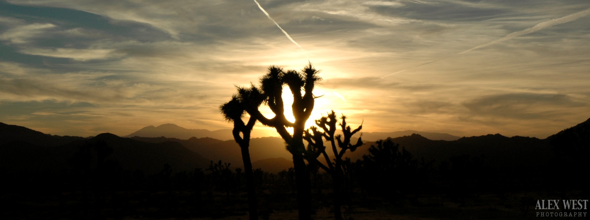 joshua-tree-landscape-photography